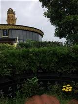 维东墓地(3)